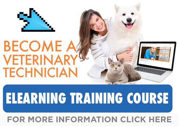 Become a Veterinary technicians
